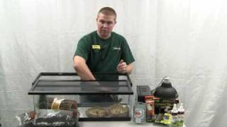 How to Set Up an Enclosure for a Russian Tortoise