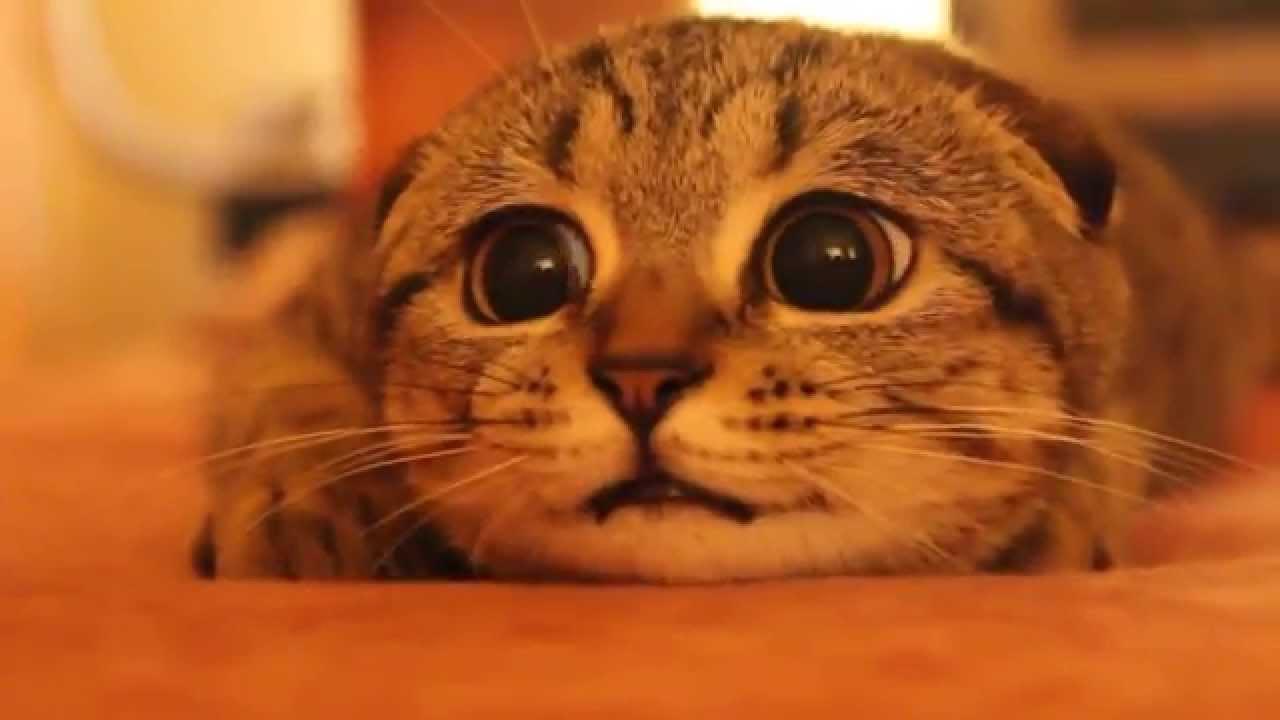 Gato asustado!