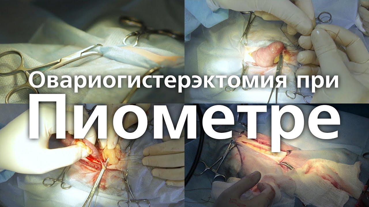 Пиометра