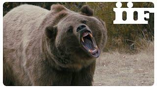 Mai Stati Uniti | Attenti all'orso | CLIP UFFICIALE