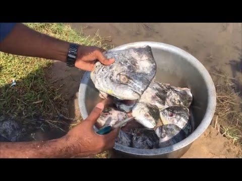 Cooking Big Fish Heads in My Village - Fish Head Kulambu - Cooking and Playing with Our Friends