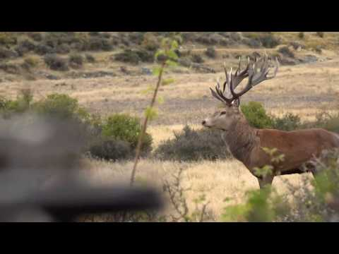 True Magnum Hosted Hunt - Gary Herbert's New Zealand Hunting