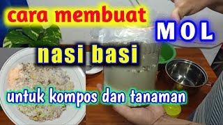 Download lagu Cara Membuat MOL Nasi Basi || Untuk Kompos dan Tanaman