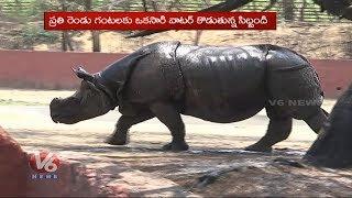 NehruZoologicalPark #AnimalReservior #Hyderabad #V6News Subscribe Y...