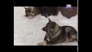 УЖАС Нападения бродячих собак