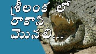 GIANT Crocodile Found in Sri Lanka | Biggest Crocodile in the WORLD | SV Telugu TV