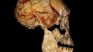 Missing Link Found, New Species of Humans Discovered in Africa, Homo Naledi