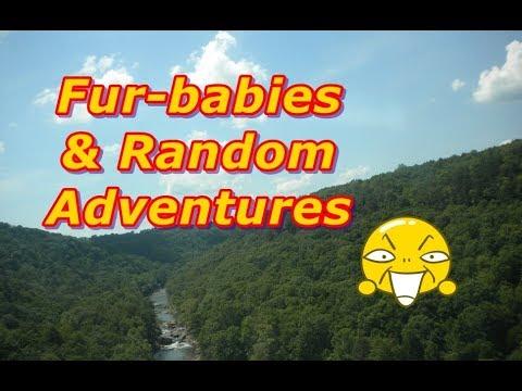 Puppies, Kittens & A Random Adventure!