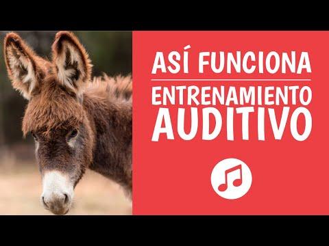 Aprende Entrenamiento Auditivo para ser un Genio Musical (Oído Relativo y Absoluto)