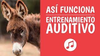 Aprende Entrenamiento Auditivo para ser un Genio Musical (O�...