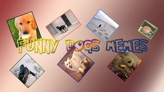 Funny Dogs Memes 03