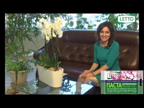 Цитокининовая паста - суперстимулятор для орхидей и других комнатных цветов