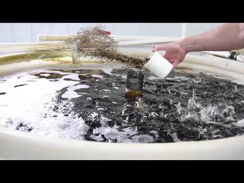 Tilapia Indoor Recirculating Aquaculture System - Ohio