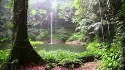 Natur Meditation - Regenwald Sounds und Regen