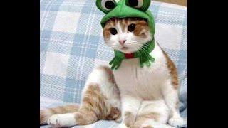 Смешные ролики про котят/ котята/ видео для детей