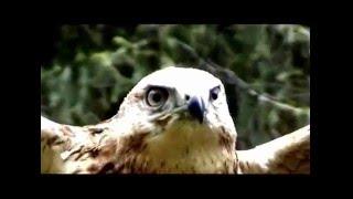видео Животный мир Сары-Челека