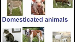 Английский для детей. Домашние животные