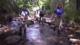 Saving Southern Appalachian Brook Trout