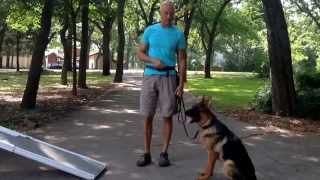 Teach Your Dog To Use A Ramp | Redeeming Dogs Training | Dallas Dog Training