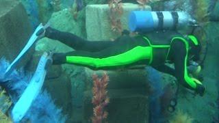 【DLR60】ファインディング・ニモ・サブマリン・ヴォヤッジ【カリフォルニアディズニー】 Finding Nemo Submarine Voyage POV Disneyland Park thumbnail