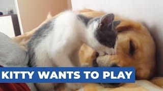 Kitten Playfully Bites Sleeping Dog