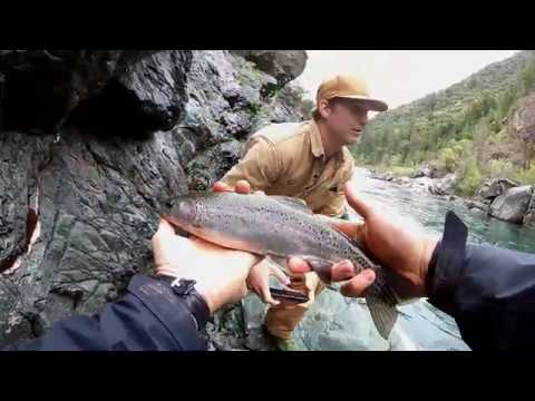 Rainbow Trout Middle Fork American River