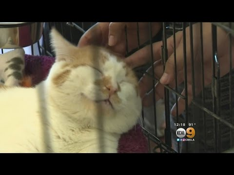 Orange County Animal Shelters Offer Free Adoptions