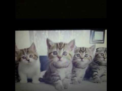 Zikir Ceken Kediler Vineturkiye Turk Komik Fikiranneniz Adamasmaca Babannabiyo Izmir Ist