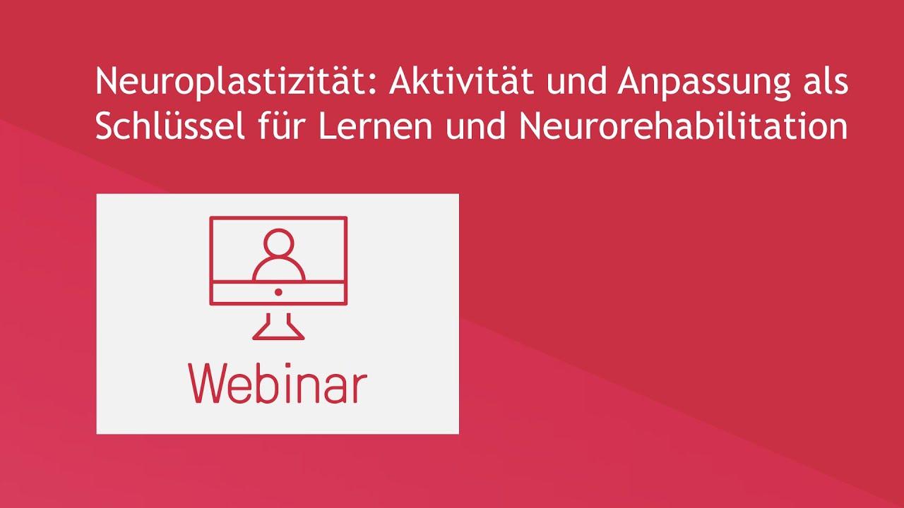 Neuroplastizität: Aktivität und Anpassung als Schlüssel für Lernen und Neurorehabilitation