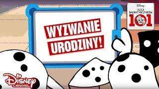 Zwierzęta kontra ludzie - Urodziny! | Ulica Dalmatyńczyków 101 | Disney Channel Polska