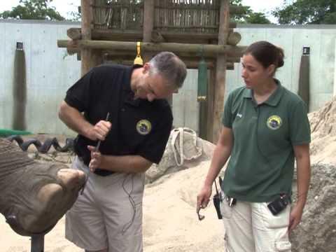 City Jobs   Zoo
