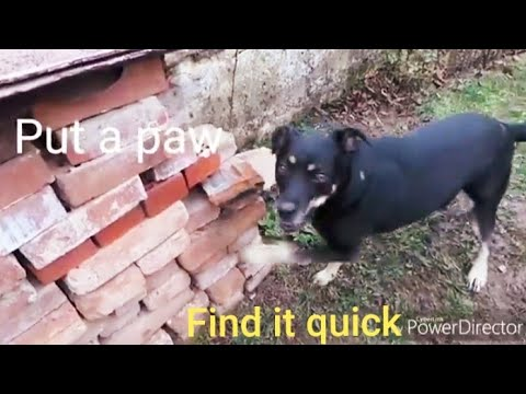 The Ace & TJ Show - Clever Dog Finds a Tea Bag Just By the Smell!