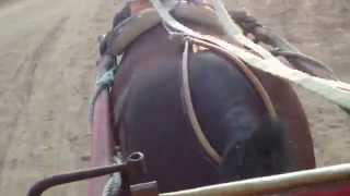 my super nice horse