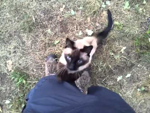 Yogi, our Siamese Cat Being Very Affectionate on Our Hike