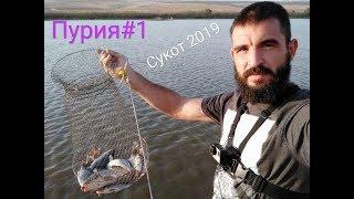 Пурия#1. Хороший мушт и крупный карп под берегом. Ночная рыбалка 13.10.19  דייג מושטים וקרפיון גדול