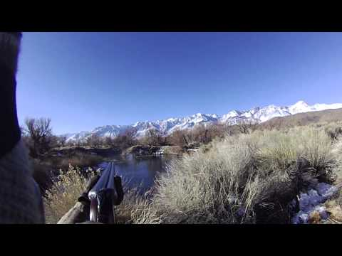 Jump Shooting Mallards in the Owens Valley