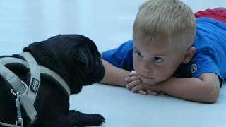 Top 13 Dogs for autistic child that will surprise you, autismfriendly dog breeds