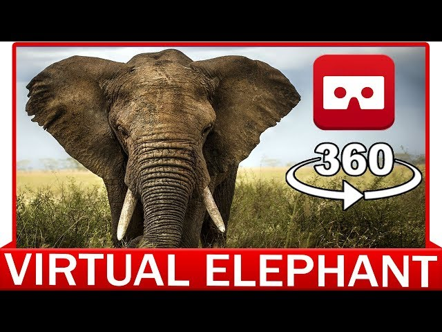 360° VR VIDEO - ELEPHANT - DISCOVERY ANIMAL & NATURE - VIRTUAL REALITY 3D