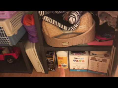 Foster Kitten Room and Closet Makeover!