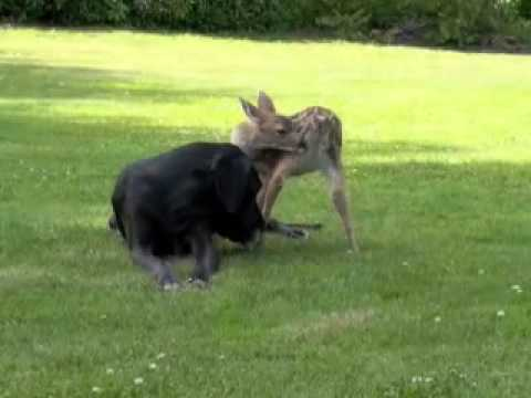 DOG AND DEER IN LOVE, THE BEGINNING.