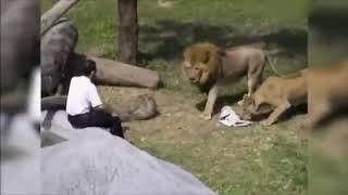 Нападение животных на людей в зоопарке,комичные и не очень случаи