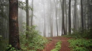 Mystical rainforest | romantic piano - relax music