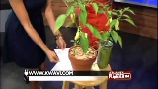 Certified Weight Loss Coach Kwavi's  appearance on Atlanta Plugged In on CBS46