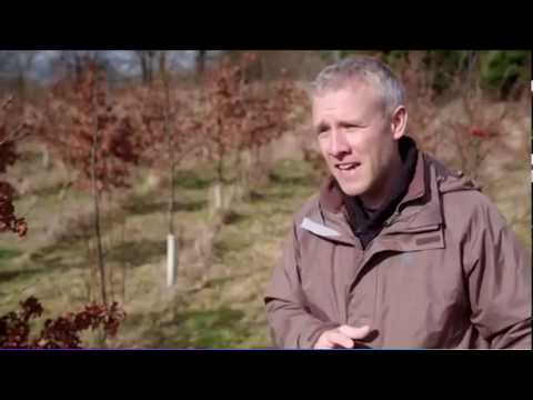 UK Climate Better Suited To Truffle Cultivation