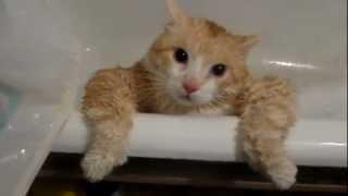 Кот Тима не может вылезти из ванной и смешно, и грешно