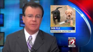 Canine Flu Outbreak Sickens Hundreds Of Dogs In Midwest