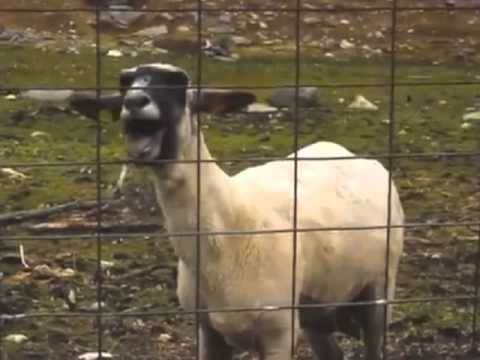Taylor Swift -- Trouble (Goat Version) FULL SONG!!!!!