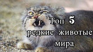Топ 5 редкие животные мира