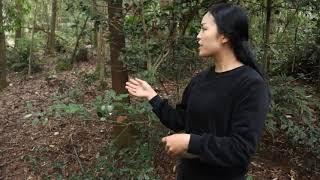 【南方小蓉】漂亮80後姑娘在深山裏養的一群土雞,過著自由而悠閑的原生態生活