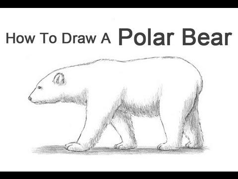 How to Draw a Polar Bear - YouTube